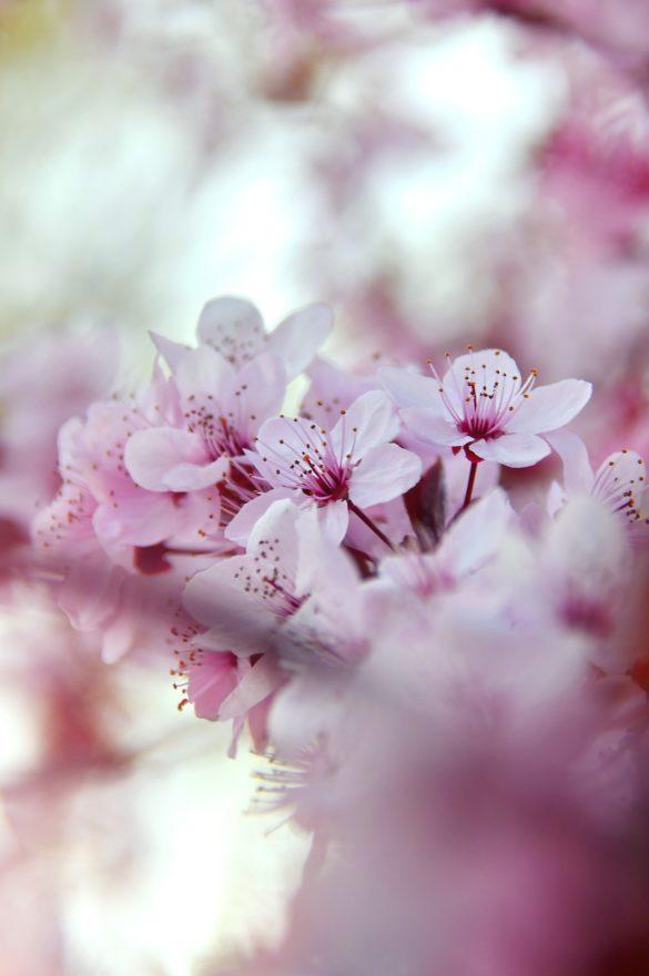 imagine cu flori frumoase pentru telefon