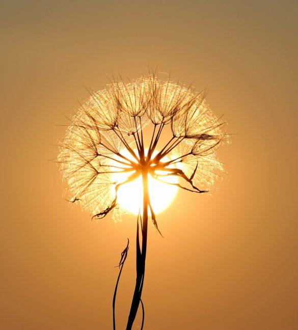 imagini cu flori telefon