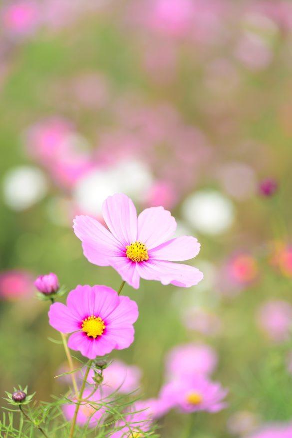 imagini cu flori de camp frumoase