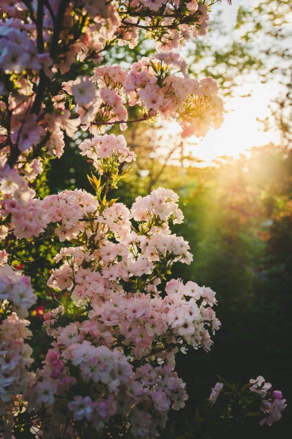 imagini frumoase cu flori